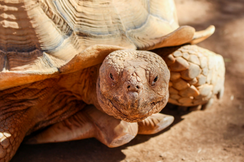 Being more of a Tortoise
